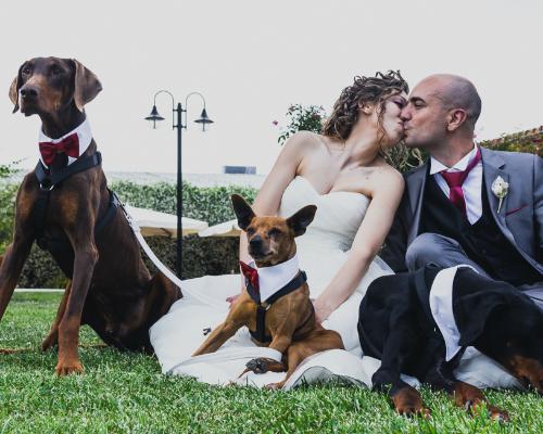 #StartupMonAmour – Wedding Dog Sitter, quando il cane va al matrimonio